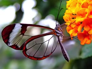 Real Life Butterfly Pictures Nylon Mesh Butterflies...